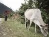 Laos, la terra del milione di elefanti 06
