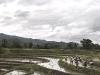 Laos, la terra del milione di elefanti 09