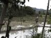 Laos, la terra del milione di elefanti 14